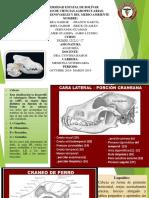 Anatomia Expo