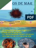 Presentacion Erizo de Mar