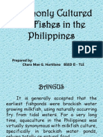 Commonly Cultured Fin Fishes in the Philippines