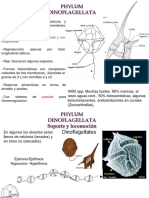 Invertebrados Clase 2