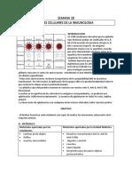 SEMANA 28 Inmunología