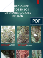 Descripcion de Insectos en Los Diferentes Lugares de (1)