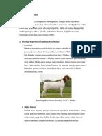 Fisiologi Reproduksi kambing