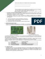 Evaluación diagnóstica CTA - 1° krowr