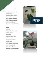 Clasificación de plantas