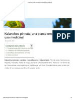 Kalanchoe Pinnata, Una Planta Ornamental de Uso Medicinal