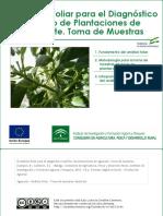 El Análisis Foliar Para El Diagnóstico Nutritivo de Plantaciones de Aguacate. Toma de Muestas[1]