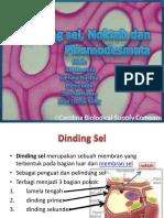 dinding sel noktah dan plasmodesma