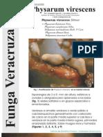 FUNGA VERACRUZANA Num.85 Physarum virescens