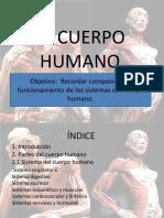 Repaso Sistemas Del Cuerpo Humano 7 SG