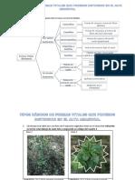 Tipos Básicos de Formas Vitales Que Podemos Distinguir en El Alta Amazonia