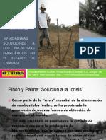 Pinon y Palma Chiapas