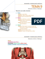 Tema 9 Miembro Inferior. Miología