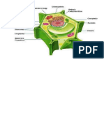 Cartel Celula Vegetal