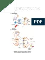 Patofisiologi, manifes, diagnosis.docx