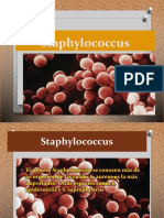 Practica n2 (Staphylococcus)