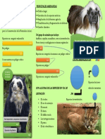 Infografia Ecologia y M. Ambiente (Animales Colombia).docx