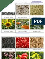 Seminte si plante.pdf