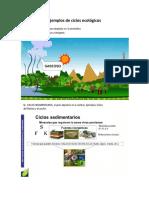 Ejemplos de ciclos ecológicos.docx