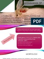 Leishmania sp.pptx