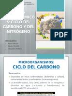 Ciclo Del Carbono y Del Nitrógeno Copia