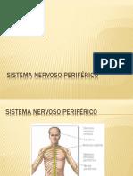 3 - Sistema Nervoso Periférico - Professor Fabrício Brito