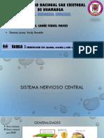 Embrio de SNC Medula