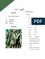 85468551-Fisiologia-del-cultivo-de-Palto.pdf