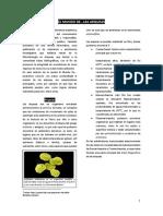 Revista Arqueas.docx