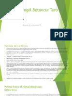 Palmera californiana y  Areca