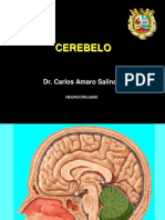 CEREBELO (1)
