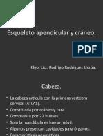Esqueleto Apendicular y Craneal