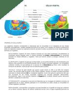 Biologia-Partes de la célula animal y vegetal