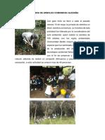 JORNADA DE SIEMBRA DE ARBOLES COMUNIDAD ALEDAÑA.docx