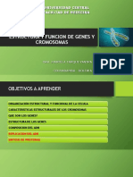 TEMA 2 Estructura y Funcion de Genes y Cromosomas
