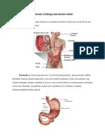 anatomia intestinulu.docx