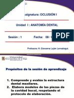 1_ Anatomia Dental-nomenclatura_formatos de Ppt 2018 (1)Uigv-oclusion -I- (1)-Converted