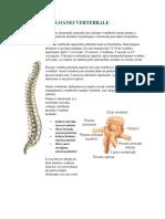 Anatomia_Coloanei_Vertebrale.docx