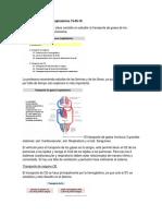 Transporte de gases respiratorios 13.docx