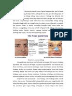 Anatomi Hidung