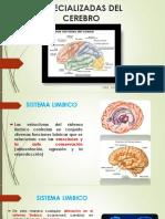 Areas Especializadas Del Cerebro