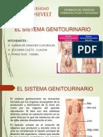 sistema genitourinario.pptx