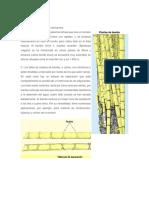 ELABORACION DEL LADRILLO.docx