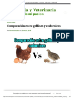 Gallinas vs codornices