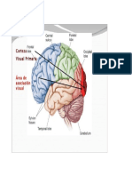 Areas de asociacion visuales.docx
