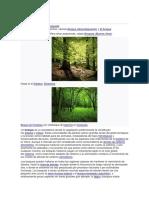 bosques 2030.docx