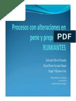 alteraciones_en_pene_y_prepucio.pdf