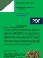 1. PRINCIPALES ENFERMEDADES DE LOS CULTIVOS AGRÍCOLAS.pdf