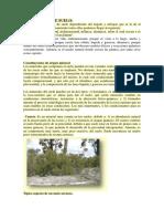 212954522-minerales-del-suelo-pdf.pdf