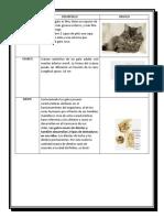 clases de mamiferos.docx